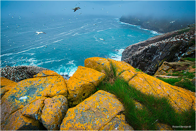 Overlooking the cliffs at Cape St. Mary's by Robert Berdan ©