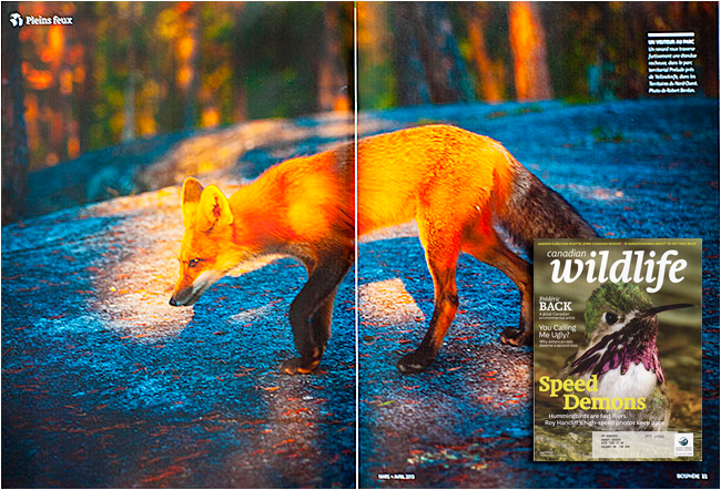 Red Fox Biosphere magazine by Robert Berdan ©