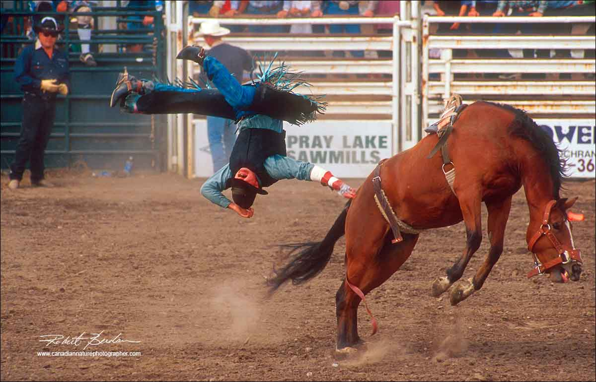 Cowby holding onto his hat after being bucked off a horse at the Cochrane Rodeo by Robert Berdan ©