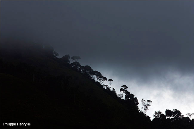 Cloud forest by Philippe Henry ©