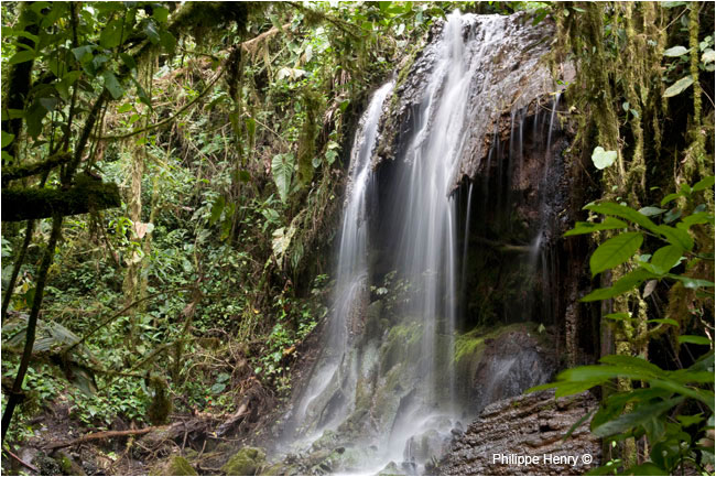 Waterfall in cloud forest by Philippe Henry ©