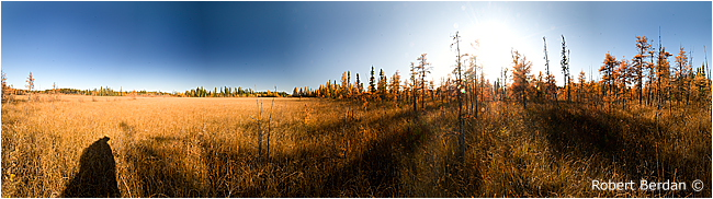 Panorama of boreal bog by Robert Berdan ©