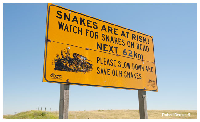 snake sign by Robert Berdan ©