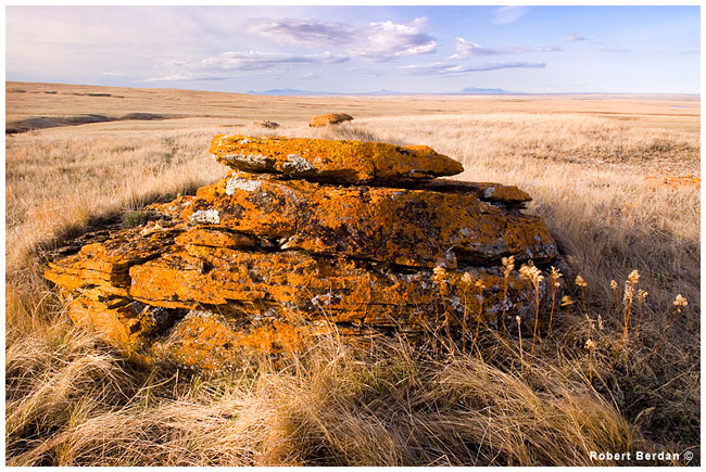 One of the large concretions still partially covered by prairie - Red Rock Coulee by Robert Berdan ©