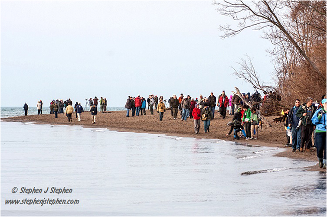Birders gather at Point Peele by Stephen Stephen ©