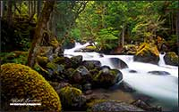 Creek near Pemberton British Columbia by Robert Berdan