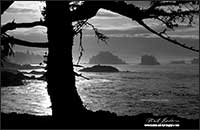 Sunrise Ucluelet Vancouver Island -black and white photo Robert Berdan