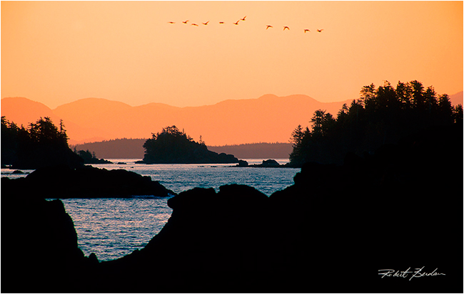 Canada geese fly over broken islands by Robert Berdan ©