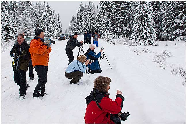 Photographers in winter photographing Elk in Banff National Park by Robert Berdan