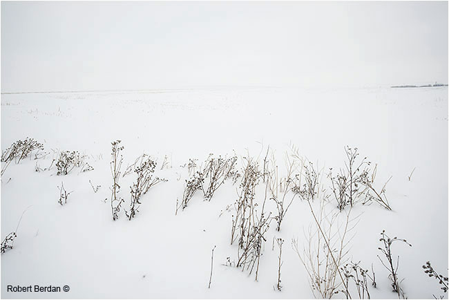 Snow covered field merges with white sky by Robert Berdan ©