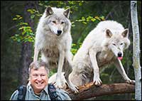 Robert Berdan and a couple of wolves